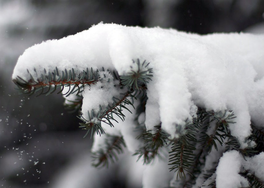 Image of Snowy Weather